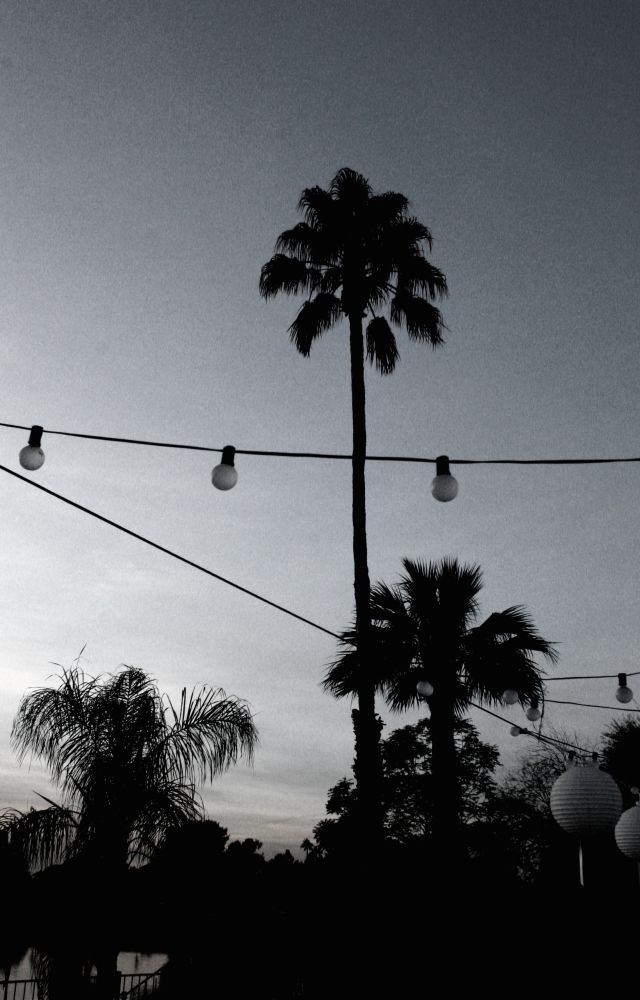 Palm Trees & String Lights by h.wilson