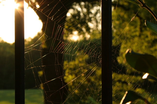 Spiderweb at Sunset by h.wilson