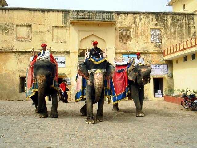 Jaipur Elephants by h.wilson