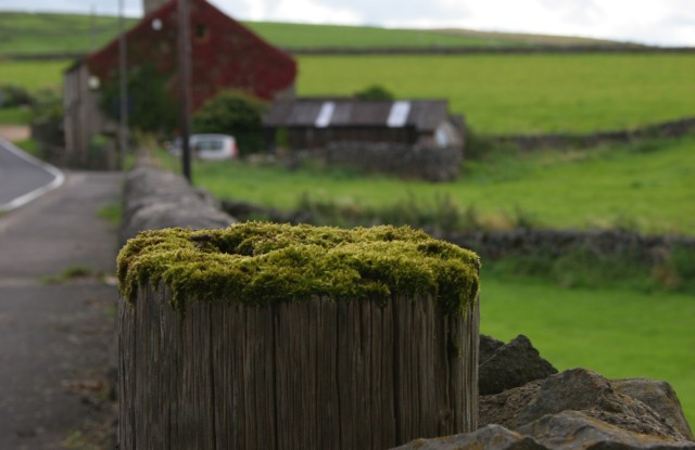 Moss Covered Stump by h.wilson